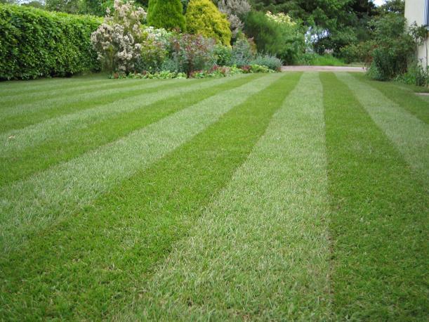 Lawn-stripey-1mg1
